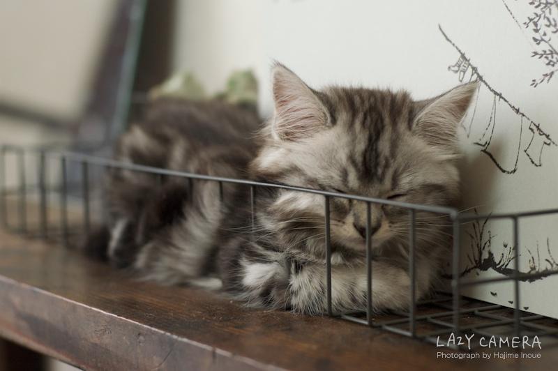 カゴ入り子猫